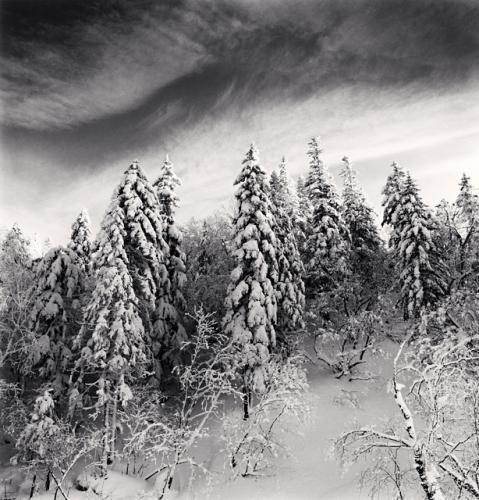 Michael Kenna, Snow Clad Trees, Heilongjiang, China. 2012