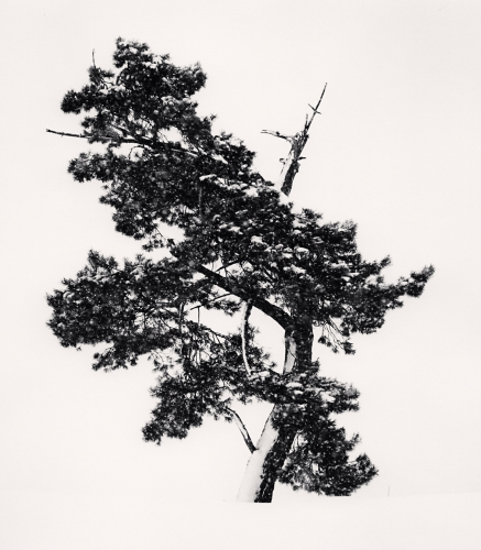 Michael Kenna, Stately Tree in Snow Storm, Asahikawa, Hokkaido, Japan. 2011