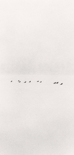 Michael Kenna, Ten Birds in a Snowstorm, Wakoto, Japan, 2002