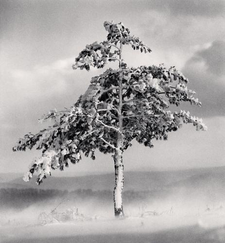 Michael Kenna, Tree in Snowdrift, Yangcao Hill, Wuchang, Heilongjiang, China, 2011