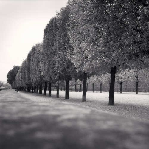 Michael Kenna, Tuileries Gardens, Study 3, Paris, France, 2011