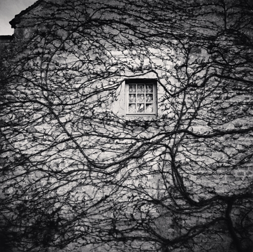 Michael Kenna, Window and Vines, Abbaye de Fontenay, Bourgogne, France, 2013