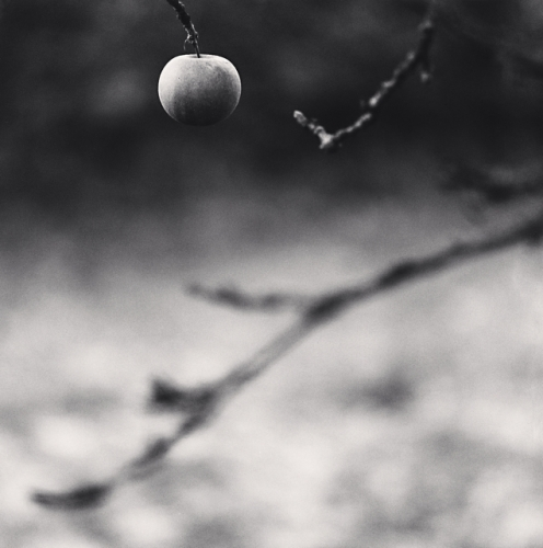 Michael Kenna, Winter Apple, Château d'Haroué, Lorraine, France, 2013