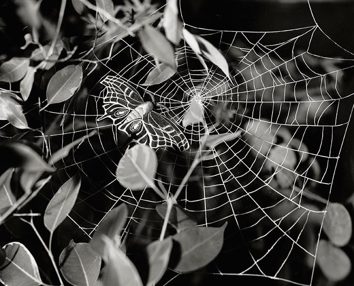 Lori Nix, Spider Moth, 2011