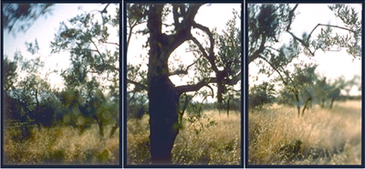 JoAnn Verburg, As It Is (Olive Trees for James Broughton), 1999, 40 inches x 7.5 feet, edition of 15