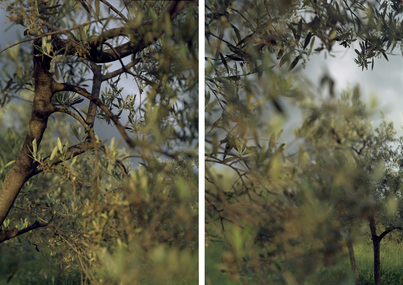 JoAnn Verburg, Waiting in Bazzano, 2008, 28.5 x 20 inches each, edition of 15