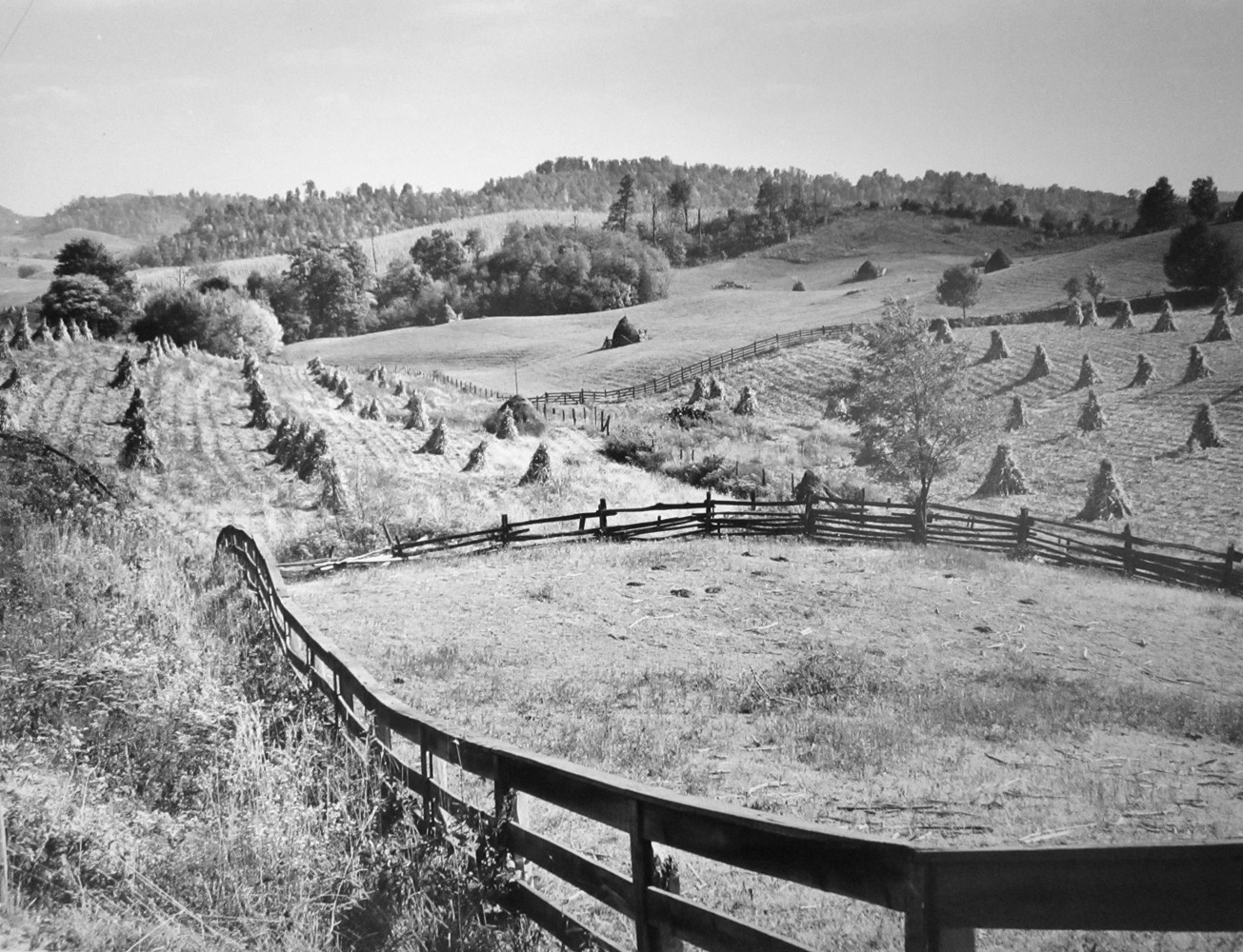 Marion Post Wolcott, Board and split rail fences around fields of shocked corn. Near Marion, Virginia, 1940, gelatin silver print, signed, 16 x 20 inches