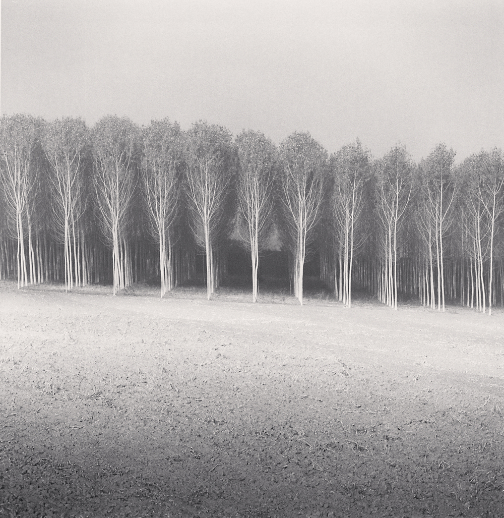 Michael Kenna, Forest of Poplars, Caposotto, Sermide, Mantova, Italy, 2018