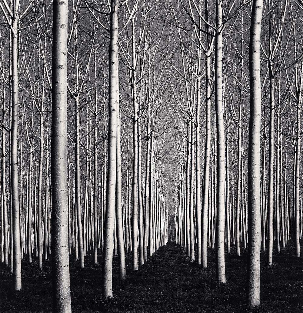 Michael Kenna, Spring Poplar Trees, Pavia, Italy, 2019