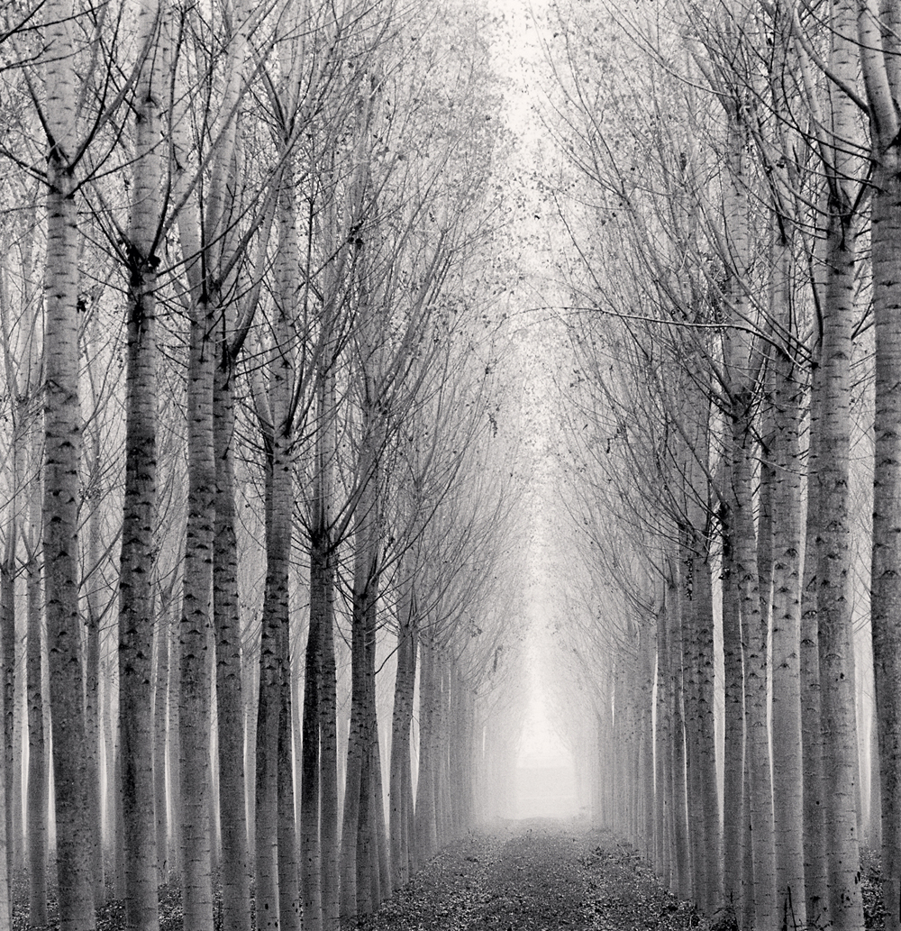 Michael Kenna, Tunnel of Poplars, Boretto, Reggio Emilia, Italy, 2017