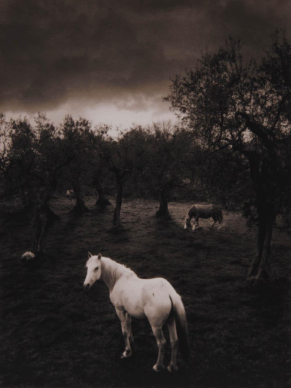 Pentti Sammallahti, Cilento, Italy (white horse), 2000, toned gelatin silver print, 5.75 x 4.5 inches, price on request